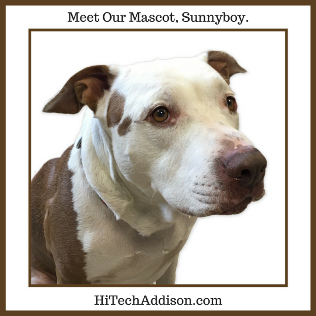 meet-our-mascot